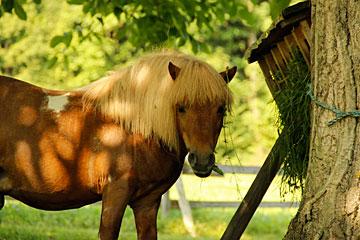 Pferde und Ponies auf unserem Bauernhof in Bayern